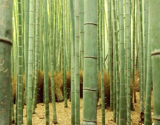 Atviros Aikido pamokos Žvalumo dienose VU Botanikos sode