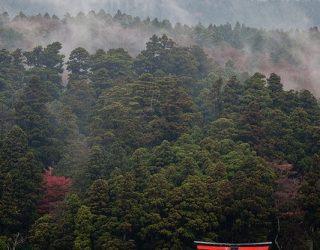 Aikido rudens dienos stovykla